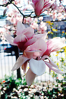 FLOWERS<br />