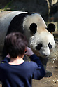 April 1, 2011, Tokyo, Japan - A female giant panda &quot;Shin Shin&quot; is seen at Ueno Zoo in Tokyo on Friday, April 1, 2011, on the first day its appearance with a fellow male panda &quot;Ri Ri&quot;, not seen, to the public. Thousands of visitors flocked to catch a first glimpse of a pair of pandas on loan from China, in a welcome respite from the gloom over last month's massive earthquake and tsunami in northern Japan. (Photo by Daiju Kitamura/AFLO) [1045] -ty-