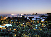 Point Pinos at Low tide, Pacific Grove, CA