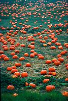 Pumpkin patch, Oceanside, California