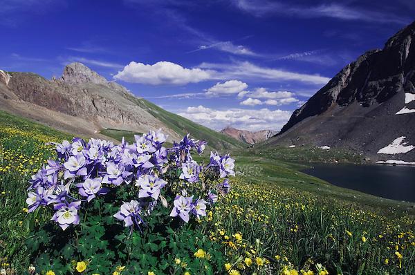 Clear Lake and wildflowers in alpine meadow,Blue Columbine,Colorado Columbine,Aquilegia coerulea, Alpine Avens, Ouray, San Juan Mountains, Rocky Mountains, Colorado, USA