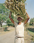 Man carrying wood to make rope, near Udaipur, India