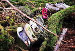 The shoes of what appear to be a woman, man and two children lie at the base of a tree in Aokigahara Jukai, better known as the Mt. Fuji suicide forest, which is located at the base of Japan's famed mountain west of Tokyo, Japan. It is not unusual for those contemplating suicide to lay out a sheet or item of clothing to lie on, but removing their shoes before they do.