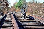 Black Lab On Railroad Tracks