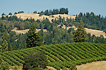 Russian River vineyards, Sonoma, California