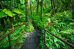 Jungle trail at Hawaii Tropical Botanical Garden, Hamakua Coast, The Big Island, Hawaii USA