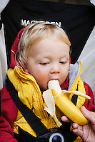 Portrait of a toddler sitting in his pushchair being fed a banana.