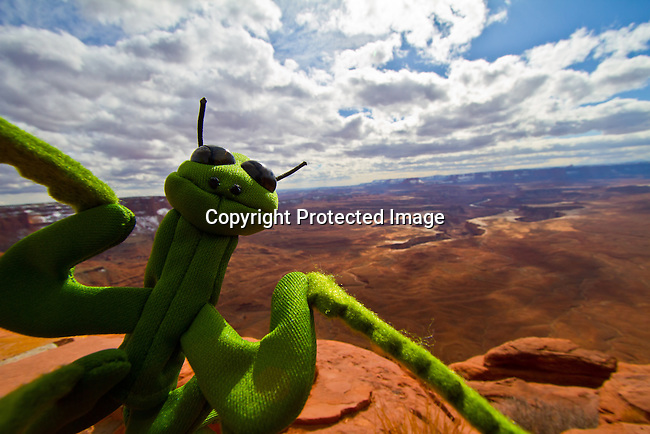 Stuffed green puppet pray mantis with the Green River from the Island in the Sky in Canyonlands National Park outside Moab, Utah. - Jim Urquhart/Straylighteffect.com
