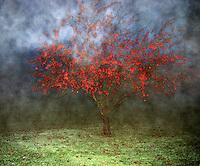 Spooky tree at Holloween