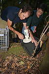Sam & Jean Checking Microchip Put In Mountain Brushtail Possum