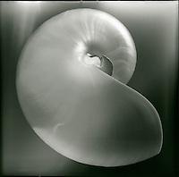 Nautilus shell<br />