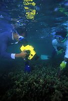 Proffessor Ekaratne and assistant document dead corals. Reef died due to a rise in sea temperature.
