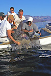 Releasing Satellite Tagged Black Sea Turtle