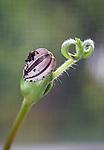 Spring sunflower seedling leaves stem shell still attached