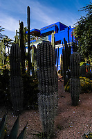 Morocco, Marrakesh. The Majorelle Garden is a botanical garden in Marrakesh. The garden has a large collction of cactus.