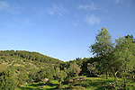 Masua forest (Park Britannia) in the Shephelah