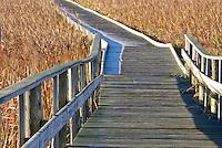 Wild golden grasses off boardwalk in Lake Erie wetlands and wildlife area
