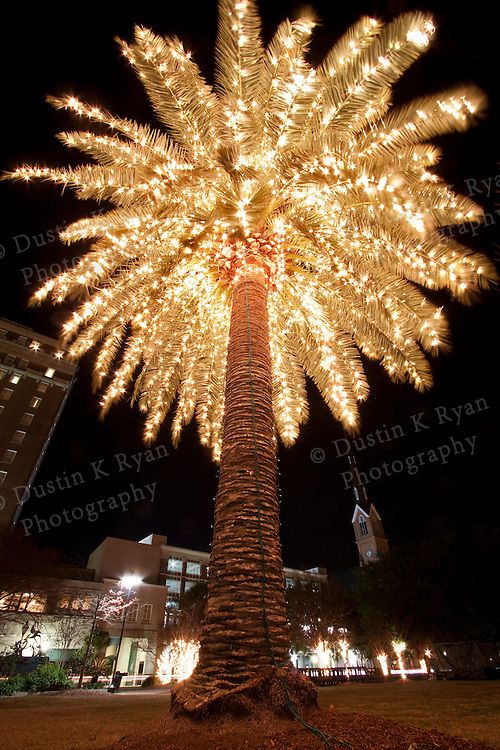 Palm Tree Decorated With Christmas Lights Holiday Marion