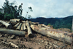 Deforestation Landscapes Logging Sarawak