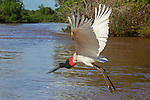 Jabiru, Brazil