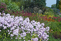 Phlox paniculata 'Blue Evening' in garden use at front of Piet Oudolf border with Persicaria & Achillea Phlox paniculata Blue Evening