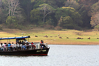 20080131_Periyar, India_ Tourists in a boat, observe a group of herbavores, including Sambar deer and Gaur also known as Indian bison in the Periyar Lake, which is located in the Periyar Wildlife Sancuary in the Southern Indian state of Kerala.  Photographer: Daniel J. Groshong/Tayo Photo Group