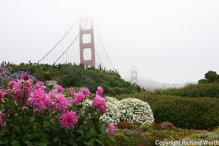 Fog shrouds the Golden Gate Bridge but doesn't hide the brilliantly colored flowers in the parking/viewing area.