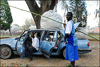 Kendrick Green, left, and Lamont Paige, right, of Selma, pack up their car after collecting several hundred pounds of Spanish moss from Live Oak Cemetery in Selma Sunday afternoon.  The moss will be sold to be used as stuffing in the lining of coffins and furniture.