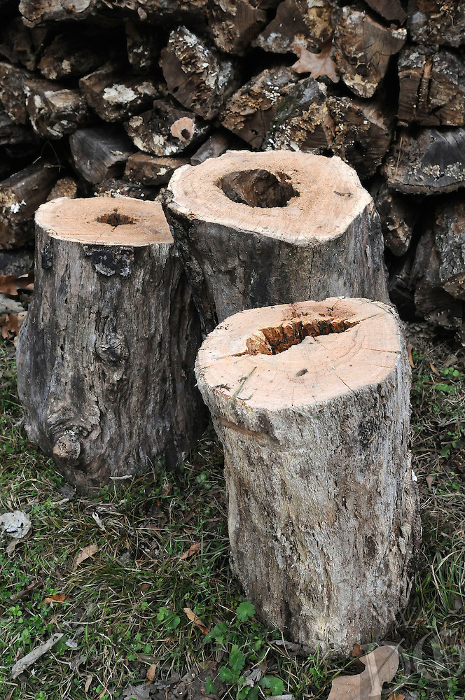 NWA Democrat-Gazette/FLIP PUTTHOFF <br /> A chimney log is guaranteed to   Dec. 21 2016    jazz up any campfire. Simply place a hollow log upright on a bed of campfire coals. Flame will soon shoot out the top like a blowtorch in a dazzling display.