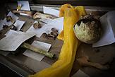 Menschliche Überreste, ein Schädel, Knochen und kleine Fragmente, die in der Gegend um Srebrenica gefunden wurden. Das Bestimmen der DNA ist nach 20 Jahren sehr schwierig. / Human remains including a skull, bones and small fragments found near Srebrenica. After 20 years on surface it is hard to extract any DNA.