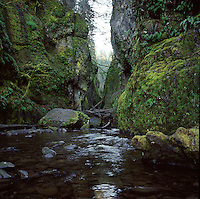 Oneonta Gorge, Columbia Gorge National Scenic Area,  near Portland Oregon