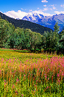 Wildflowers, Verbier, Switzerland