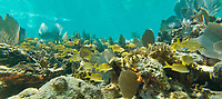 Crystal clear underwater scenes from Laughing Brid Caye National Park, is a small isle 11 miles off the coast of Belize