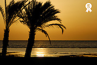 Palm trees and Red sea at sunrise, Red Sea, Egypt (Licence this image exclusively with Getty: http://www.gettyimages.com/detail/82406638 )