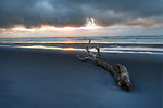 Log on black sand beach . Taranaki Region. New Zealand.
