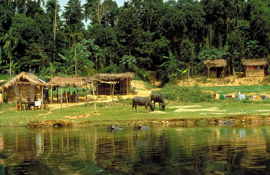 Jungle village on the Song Huong river south of Hue City in central Vietnam. Hue, Vietnam.