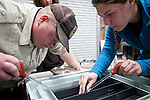 Fish biologist Adam Nanninga, left, and Hannah Ramage, right, cull dead trout eggs at the US Fish & Wildlife Lahontan National Fish Hatchery Complex in Gardnerville, Nevada, April 18, 2013.