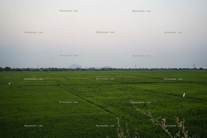 A lush paddy field, a common landscape in the agricultural rural areas in Warangal, Telangana, India, on 22nd March 2015. Safe Water Network works with local communities that live beyond the water pipeline to establish sustainable and reliable water treatment stations within their villages to provide potable and safe water to the communities at a nominal cost. Photo by Suzanne Lee/Panos Pictures for Safe Water Network