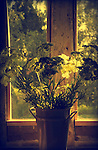 Tin vase with dried flowers in a window sill with light from behind