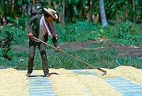 Man drying rice in Calauan, Philippines. RESERVED USE - NOT FOR DOWNLOAD -  FOR USE CONTACT TIM GRAHAM