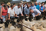 Priddy Sheep Fair Somerset Uk 2009. Farmer checking teeth mouth of sheep.