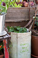 "Sweet potato vine growing out of a plastic shopping bag with the slogan ""Every bag counts"" in an inventive urban rooftop container garden.."