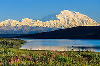 Summer Landscape Of Mt. Denali, Wonder Lake, Fireweed, Denali National Park, Alaska