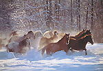 Open-range Horses<br />