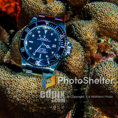 28 January 2016: A Rolex Sea-Dweller rests on a coral outcropping in 40 feet of water at Captain Don's Habitat in Bonaire. Bonaire is known for its pioneering role in the preservation of the marine environment. A part of the Netherland Caribbean Islands, Bonaire is located off the coast of Venezuela and offers excellent scuba diving, snorkeling and windsurfing.  Mandatory Credit: Ed Wolfstein Photo *** RAW (NEF) Image File Available ***