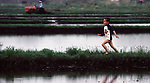In early May, a boys runs along a rice field dyke, while his father tills his rice field in Aomori Prefecture, on Northern Honshu, Japan. Most fields are prepared for the planting season by a workforce made up of women and men, who plant and cultivate their crop by using either traditional hand tools or modern tools. Photo by Jim Bryant ©2008, All Rights Reserved.