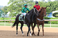 HOT SPRINGS, AR - April 14: Ever So Clever #12 with jockey Luis Contreras aboard walks in the post parade prior to the Fantasy Stakes at Oaklawn Park on April 14, 2017 in Hot Springs, AR. (Photo by Ciara Bowen/Eclipse Sportswire/Getty Images)