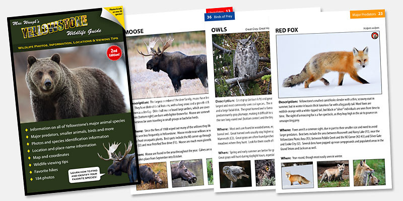 $15.99 <br />