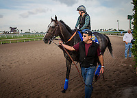 HALLANDALE BEACH, FL - JAN 27: Arrogate, with Dana Barnes is lead to the track by assistant trainer Jimmy Barnes at Gulfstream Park Race Course on January 27, 2017 in Hallandale Beach, Florida. (Photo by Alex Evers/Eclipse Sportswire/Getty Images)
