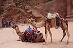 Camels near the Treasury in Petra